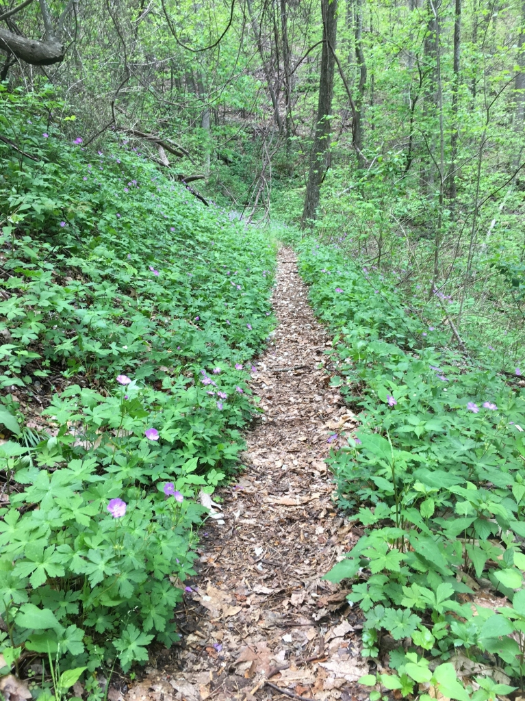 Roundtop Trail